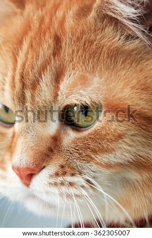 Cat portrait. Extreme closeup domestic ginger cat eye - stock photo