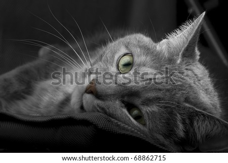 cat posing - stock photo