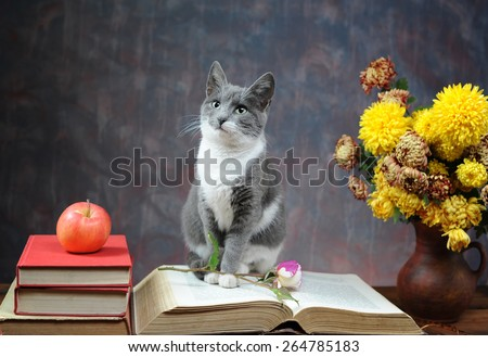 Cat posing for on books and flowers in the studio - stock photo