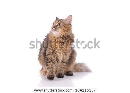 cat posing isolated over white background - stock photo