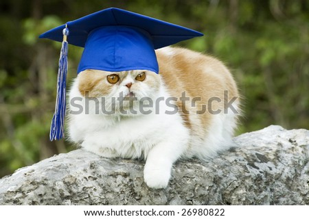 Cat posing on rock with graduation hat with tassel, funny  copy space - stock photo