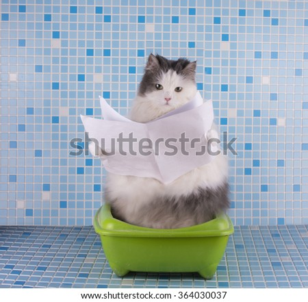 Cat reads the morning newspaper while sitting on the toilet - stock photo