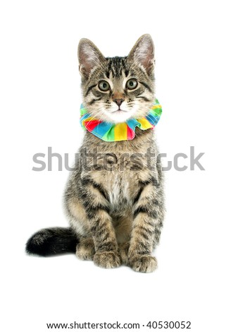 Cat ready for a party - stock photo