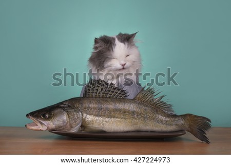 cat received a gift of his dreams - stock photo