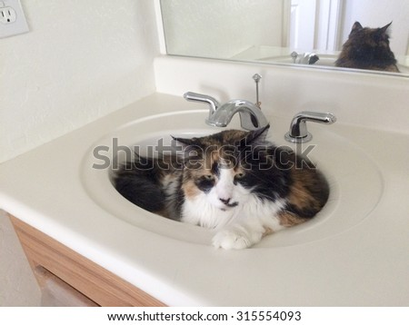 Cat relaxing in a bathroom sink - stock photo