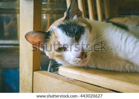Cat relaxing on the chair, Closeup - stock photo