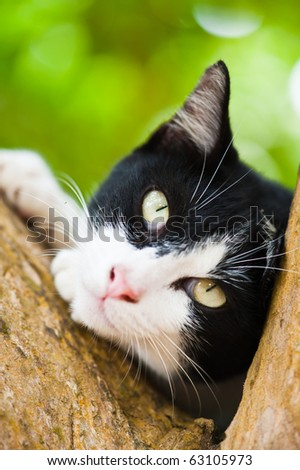 Cat Relaxing on tree - stock photo