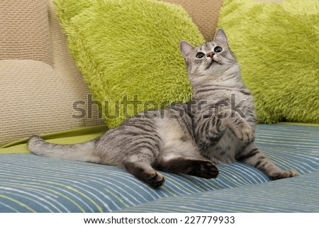 Cat, resting cat on a sofa in colorful blur background, cute funny cat close up, young playful cat on a bed, domestic cat, relaxing cat, cat resting, cat playing at home - stock photo