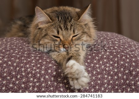 Cat, resting cat on a sofa in colorful blur background, cute funny cat close up, young playful cat on a bed, domestic cat, relaxing cat, cat resting, cat playing at home, elegant cat - stock photo