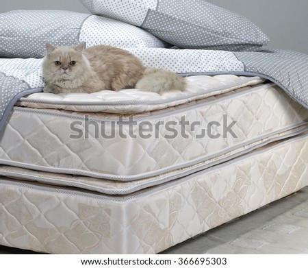 Cat resting on bed - stock photo