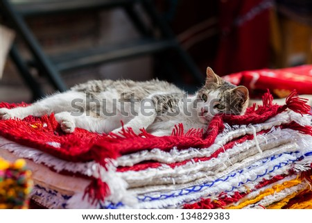 Cat resting on the carpets - stock photo