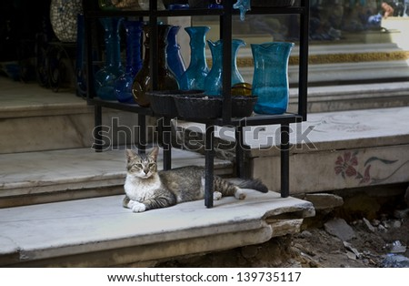 Cat resting on the steps. Scene from the Khan El Khalili bazaar in Cairo,  a major souk in the Islamic district of Cairo, Egypt - stock photo