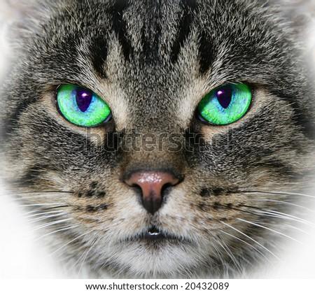 Cat's face up close - stock photo