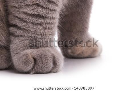 Cat's feet. Gray color. - stock photo
