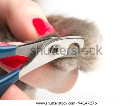 Cat's getting a nail trim - stock photo