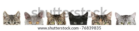 Cat's half heads on a white background - stock photo