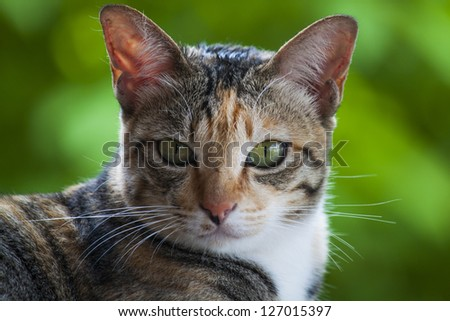 Cat's head - looking at camera. - stock photo
