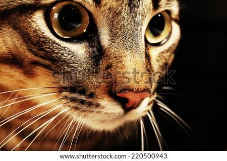 Cat's muzzle closeup - stock photo