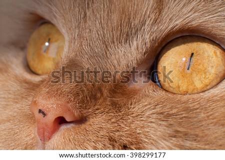Cat's nose - stock photo