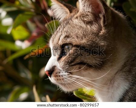 Cat's profile - stock photo