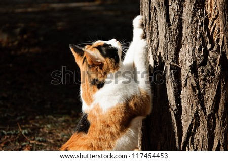 cat scratching nails on tree - stock photo