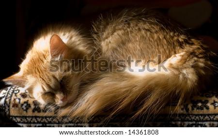 cat (sepia) - stock photo
