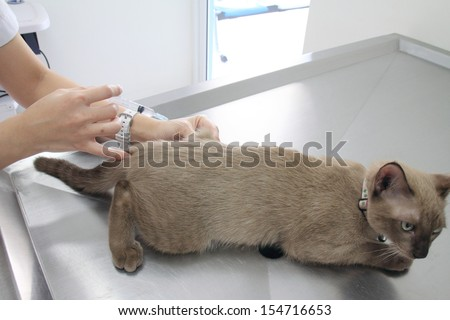 Cat sick in the hospital. - stock photo