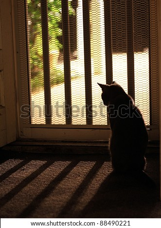 Cat Silhouette looking outside screen door - stock photo