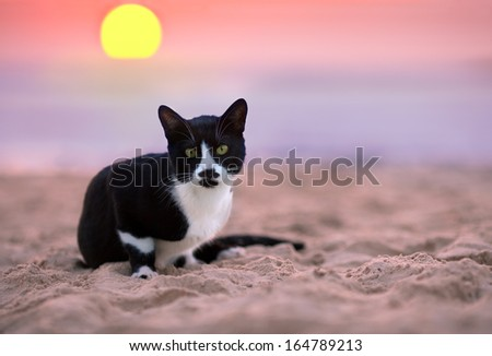 Cat siting on the beach at sunset - stock photo