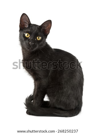 cat sits in graceful pose - stock photo