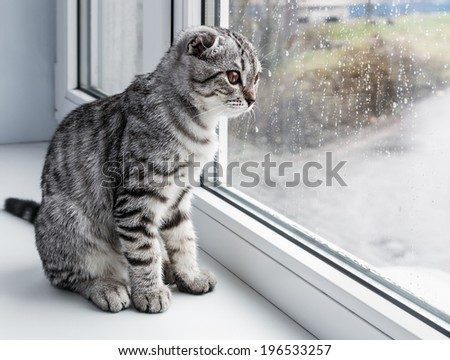 cat sits on a windowsill and looking out the window - stock photo