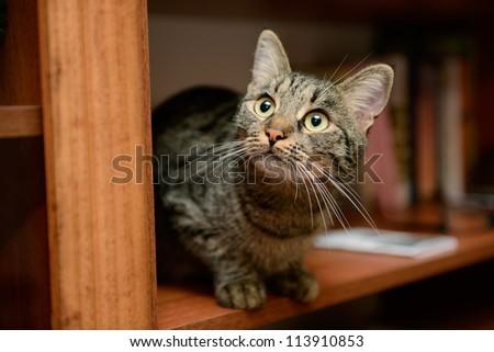 cat sitting - stock photo