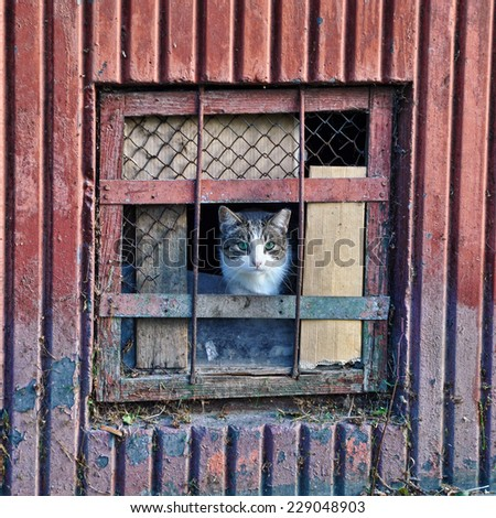 cat sitting behind bars basement. cat looks out of the cellar  - stock photo