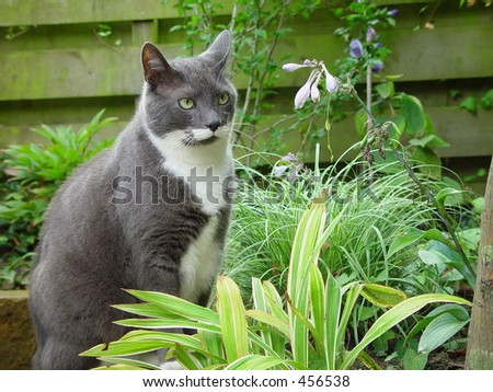Cat sitting in garden - stock photo