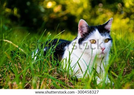 cat sitting in grass - stock photo
