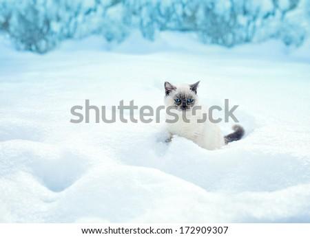 Cat sitting in snow - stock photo