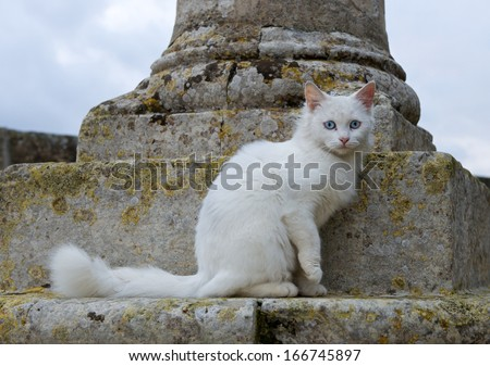 Cat sitting in the street on dark day with selective focus to cat eye, cat in the street with cloudy day background, poor day lighting, cat sitting and looking,cat  outside,defocus,concept, grey cat - stock photo