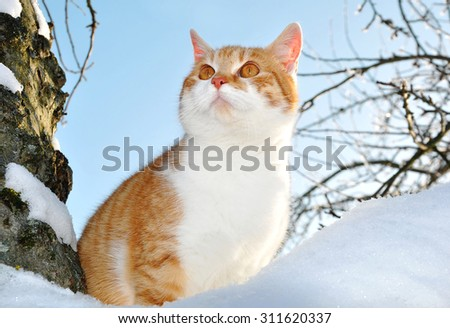 Cat sitting on a tree in winter - stock photo