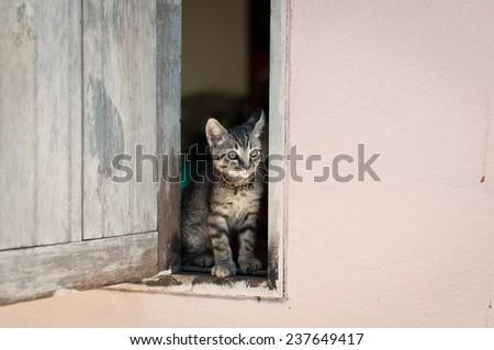 cat sitting on a window  - stock photo