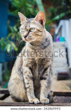 Cat sitting on chair. - stock photo