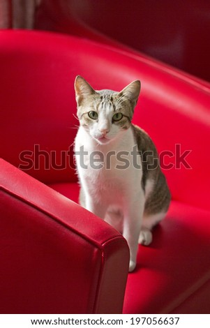 Cat sitting on red couch - stock photo
