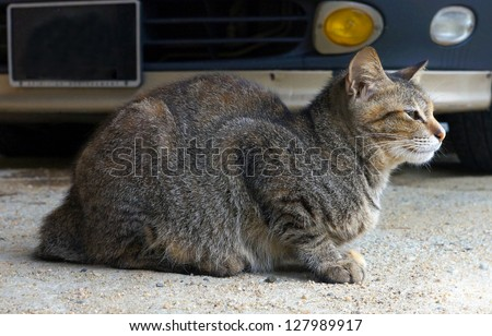 Cat sitting on sand cement floor. - stock photo