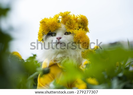 cat sitting on the grass sunny summer day - stock photo