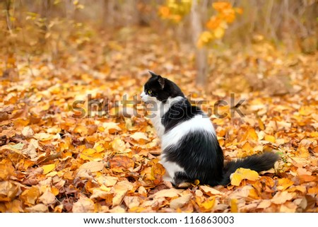 Cat sitting on the leaves - stock photo