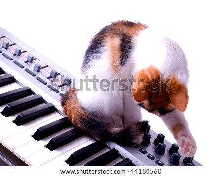 cat sitting on the piano - stock photo