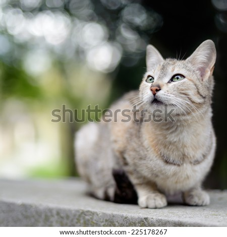Cat sitting outdoors with beautiful bokeh on background. - stock photo