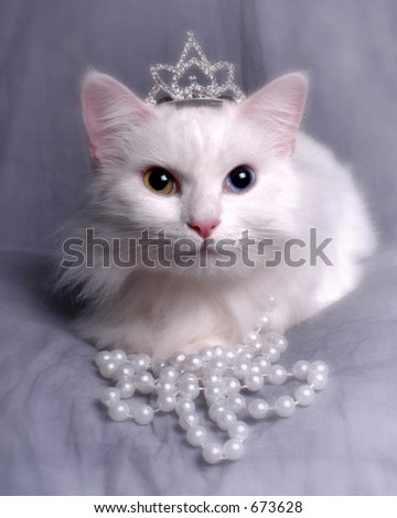 Cat sitting with crown and pearls - stock photo