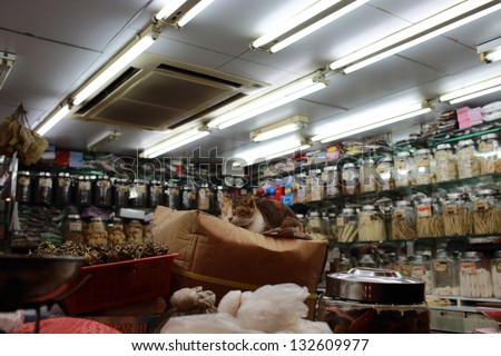 cat sleep in the chinese medicine shop - stock photo