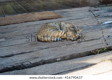 Cat sleep wood floor - stock photo