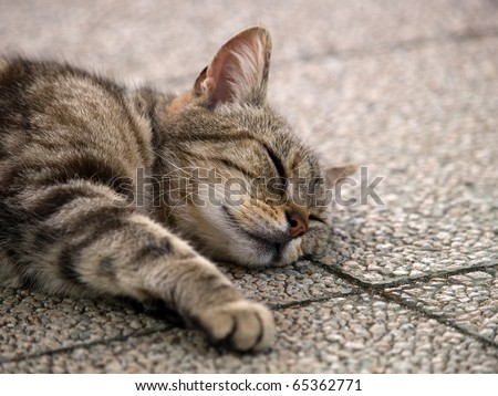 Cat sleeping face - stock photo